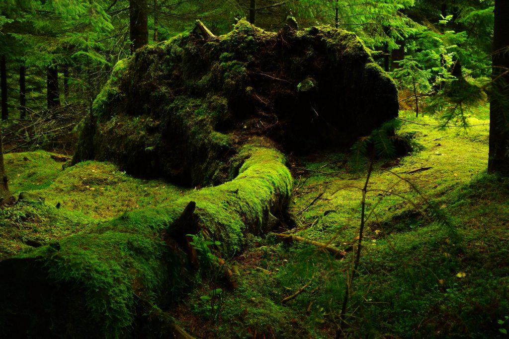 Noorwegen bos bedekt met mos